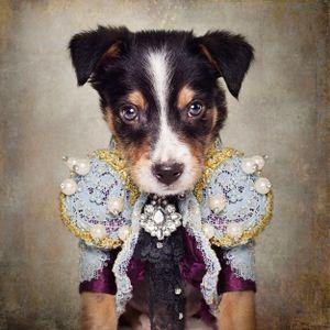 Shelter Pets Project - Loki