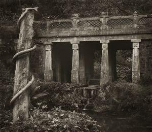 "Snake, Sezincote, 18.5x16"" Platinum Palladium © Beth Dow"