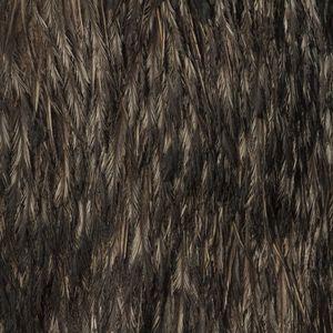 Emu © Yusuke Sakai