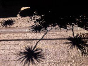 Urban nature 7