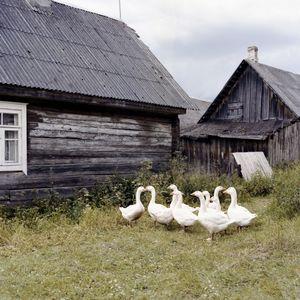 Geese, Rūdninkai, Šalčininkai district.