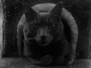 Cat at Le Café des Chats