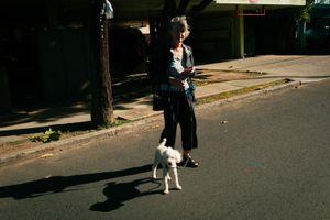 Old Blind Dog, Honolulu, Hawaii, Mar 2016