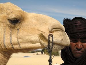 Camel and his friend