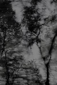 Untitled (Trees 2)