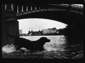 Untitled (Dog Battersea Bridge), 2012
