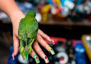 Quique the parakeet