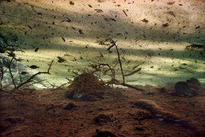 Dust Storm © Karen Glaser 2006