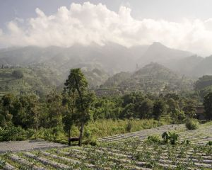 Plantations, New Selo village