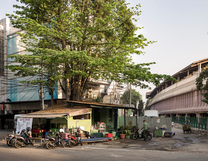 Tree Shop #1