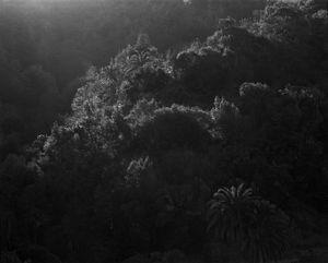 346-18, 2013 © Awoiska van der Molen, Purdy Hicks Gallery