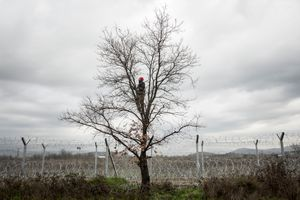 Idomeni, border closed. A man stands in a tree, close to the border fence between Greece and Macedonia. He can't get over but he can cut branches to make fire to keep warm. © Olmo Calvo, winner of the News and Events category
