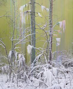 Forest 7, 2017 © Sandra Kantanen. Courtesy of Purdy Hicks Gallery.