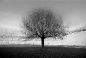 stadtbaum#3