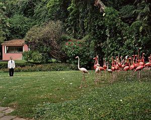 Edgar and flamingos. From the series Domésticas, 2007 © Andrej Balco