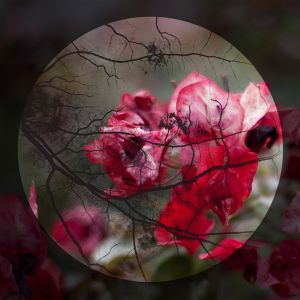 Occlusion  © Dayna Bartoli