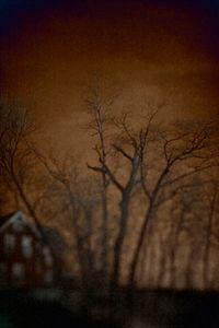 Longing Landscapes