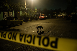 Dog at a crime scene