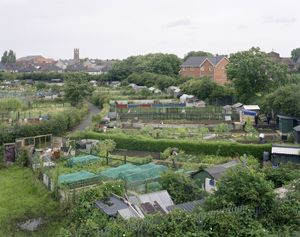 Whitehouse Allotments, Middlesbrough, North Yorkshire, 11 August 2008 © Simon Roberts