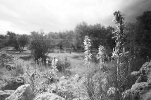Wild Flowers, 2010 © Clara Abi Nader