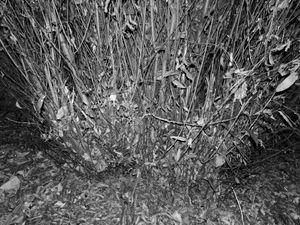 INNER FOREST III