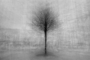 stadtbaum#11