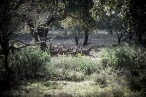 A running herd of deer, February 2014. © Antonio Pedrosa