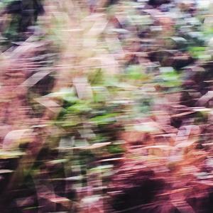 Cornish Roads (hedges), in Flow - B3276-1