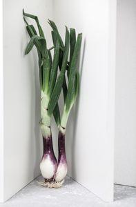 Cornered Onions