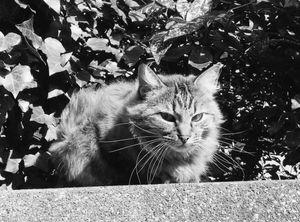 Stray Cat 1
