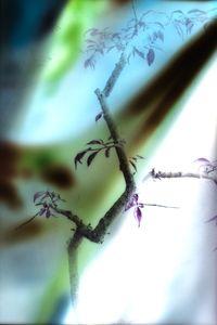 Untitled(Branch)