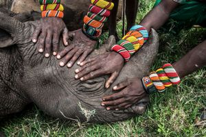 Saving Africa's Great Animals—orphaned rhino. Nature Singles, 2nd place. Ami Vitale, USA, National Geographic.
