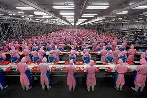 Manufacturing #17, Deda Chicken Processing Plant, Dehui City, Jilin Province, 2005 © Edward Burtynsky
