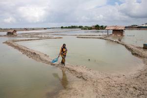 A woman going to catch crabs in Shyamnagar, Satkhira, Bangladesh