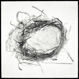 "Nest XVII, 2012                                        16""h x 16""w x 1.5""d                        archival pigment print and encaustic on panel                                                     © Christa Bowden"