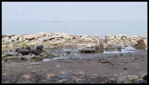 Toronto Island Profolio