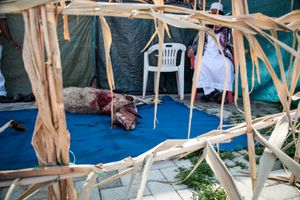 After prayers in Piazza Vittorio for Eid-el Adha, some members of the Muslim community sacrificed nine sheep.