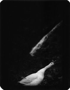 """Untitled"" (Duck), 2006 © Giacomo Brunelli"