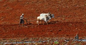 Plowing in Shan State