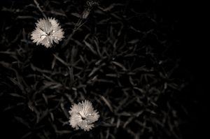 Small wonders © Rebecca Moseman