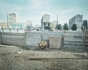 Rustavi, Georgia, 2013.