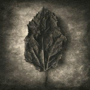 leaf© Gary
