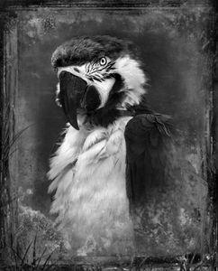 © Dianne Yudelson Macaw