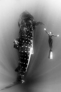Maca and whale shark