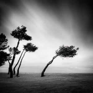 Pines © Frang Dushaj
