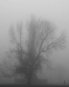 Fog, Glasgow Green