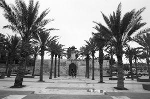 Palm Trees, 2010 © Clara Abi Nader