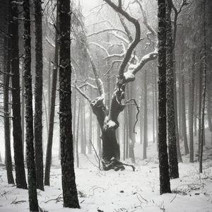 Dead tree, Sierra de Cazorla, Spain, 2013 © Antoine Bruy