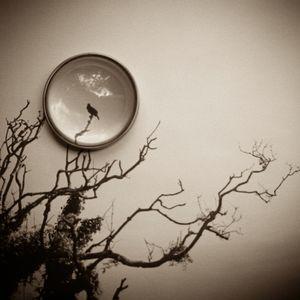 Ode To A Nightengale  © Lori Vrba