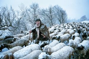 Old Shepherd. An old shepherd that had been surprised by snow storm in Gilan's countrysides in the north of Iran. Saeed Barikani, Iran, Shortlist, Smile, Open. Courtesy of 2015 Sony World Photography Awards.